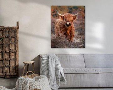 Schottischer Highlander auf der Heide von Danielle Bosschaart