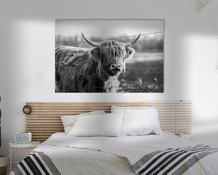 Sfeerimpressie: Schotse hooglander van Steven Dijkshoorn
