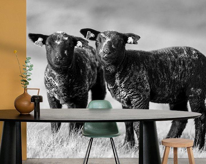 Sfeerimpressie behang: Lammetjes bij Strijensas van Steven Dijkshoorn