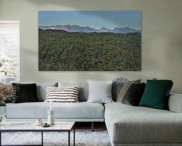 Wildernis landschap - Bergtoppen en Bos - Nieuw-Zeeland - Schilderij