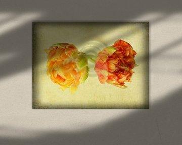 Tulpen ? Tulpen von Johanna Blankenstein