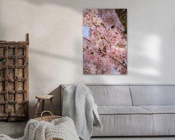 Rosa Kirschblüte Detail von Bianca Kramer
