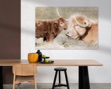 Schotse hooglander koe met kalf van Melissa Peltenburg