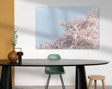 Blüte von Myrthe Vlasveld