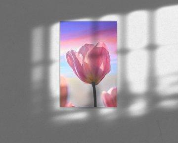 Pastel tulp van Wendy Tellier - Vastenhouw