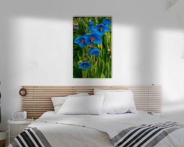 Mohnblumen blau