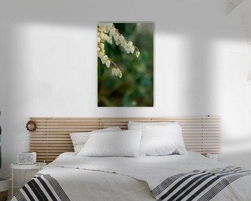 Frühlingsblumen, Makroaufnahme von weißen Blumen auf einem Busch | fine art floral art von Karijn | Fine art Natuur en Reis Fotografie