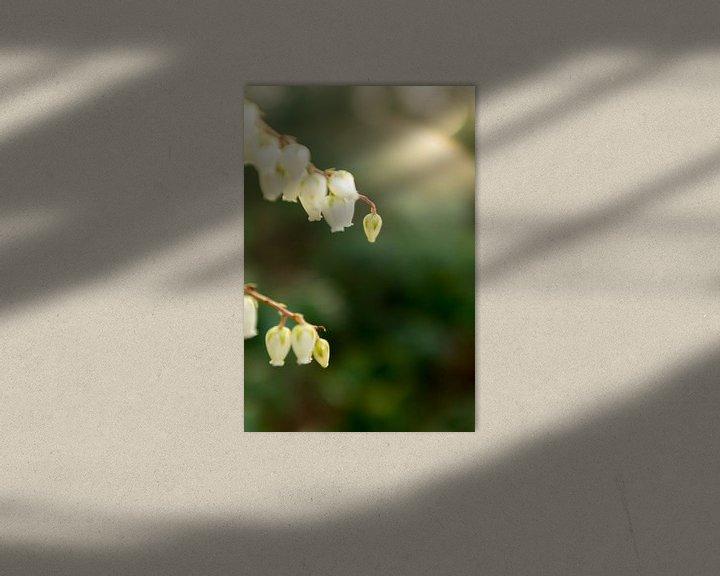 Sfeerimpressie: macrofoto van kleine witte bloemen in de lente | fine art bloemenkunst van Karijn | Fine art Natuur en Reis Fotografie