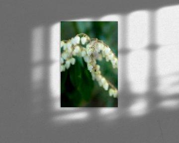 Makrofoto mit Bokeh von weißen Frühlingsblumen von Karijn | Fine art Natuur en Reis Fotografie