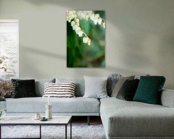 Frühling Blumen und Grün Natur | Fine Art Floral Art von Karijn | Fine art Natuur en Reis Fotografie