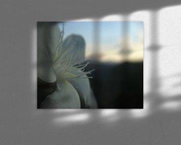 Weiße Blüte von See Like Me