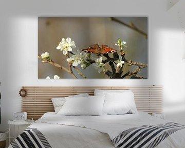Vlinder dagpauwoog  op tak met witte bloesems