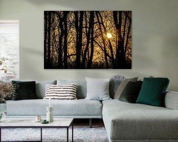 Gele zonsondergang door bomen