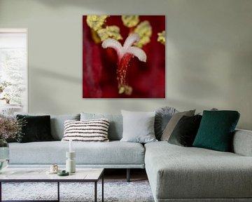 Herz einer Tulpe von Erik Spijkerman
