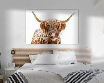Portrait d'une vache écossaise des Highlands dans la neige sur Sjoerd van der Wal