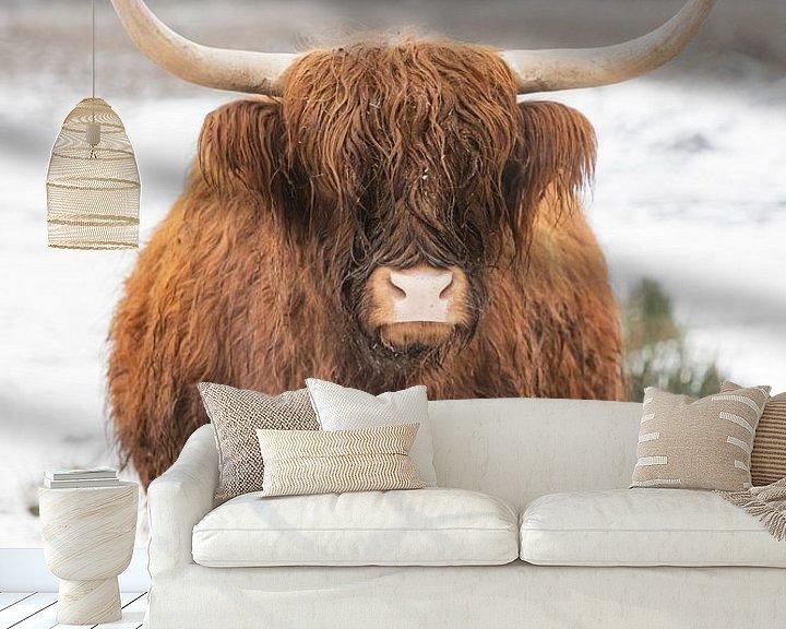 Sfeerimpressie behang: Portret van een Schotse hooglander koe in de sneeuw van Sjoerd van der Wal