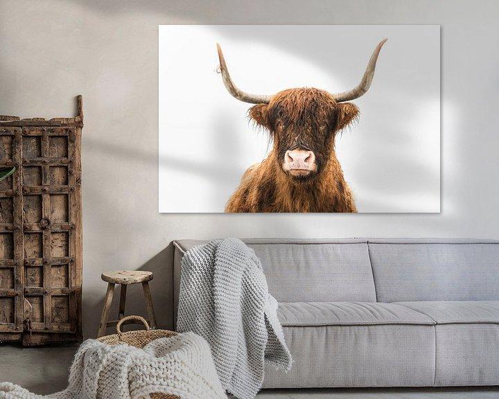 Sfeerimpressie: Portret van een Schotse hooglander koe van Sjoerd van der Wal