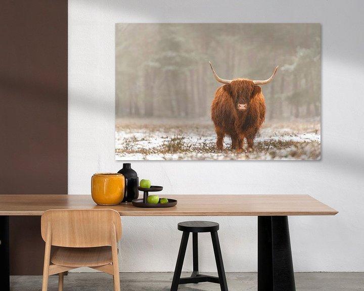 Sfeerimpressie: Portret van een Schotse hooglander koe in de sneeuw van Sjoerd van der Wal