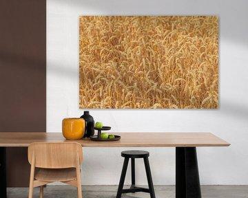 Des épis de blé mûrs dans un champ en été. sur Sjoerd van der Wal
