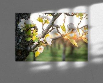 Blossom! von Max ter Burg Fotografie