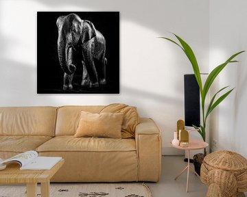 Olifant van Rob Boon