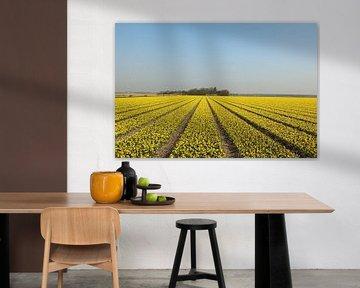 Ein Feld mit Narzissen von Pim van der Horst