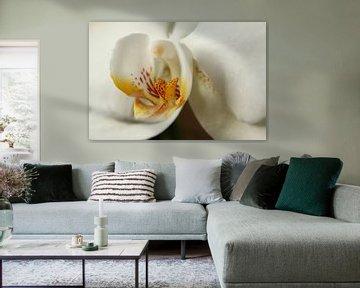 Eine weiße Orchidee von Pim van der Horst