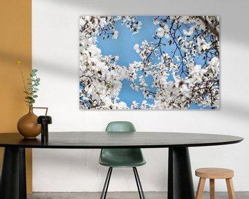 Weiße Blüten der Magnolie blühen im Frühling von Jessica Berendsen