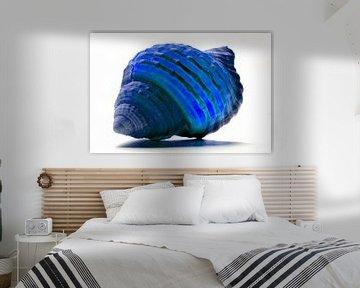 Shell in Blue van De Rover