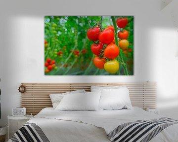 Frische reife Tomaten, die an Tomatenpflanzen wachsen von Sjoerd van der Wal