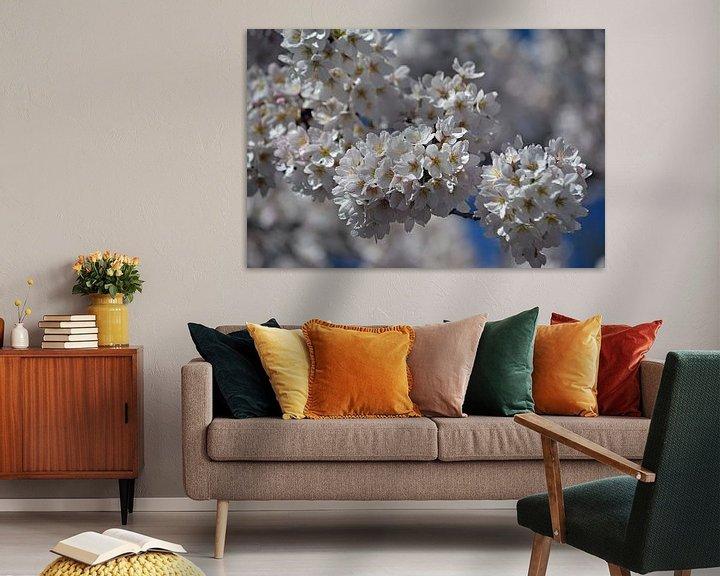 Sfeerimpressie: Kersenbloesem in bloei van JTravel