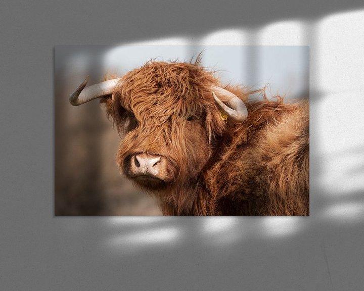 Beispiel: Porträt Schottischer Highlander vintage von Latifa - Natuurfotografie