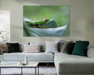 Grenouille cool, grenouille lémurienne aux yeux rouges, rainette verte Costa Rica sur Mirjam Welleweerd