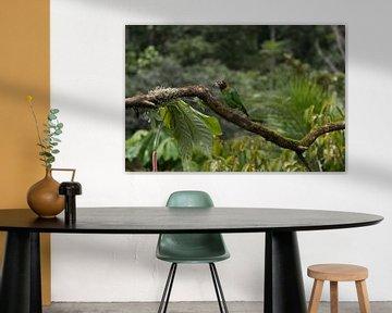 Perroquet à collier arc-en-ciel du Costa Rica sur Mirjam Welleweerd
