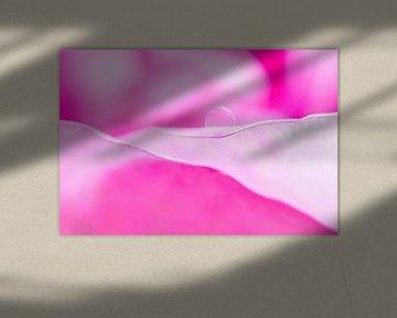 roze bloem met druppeltje water van Klaartje Majoor