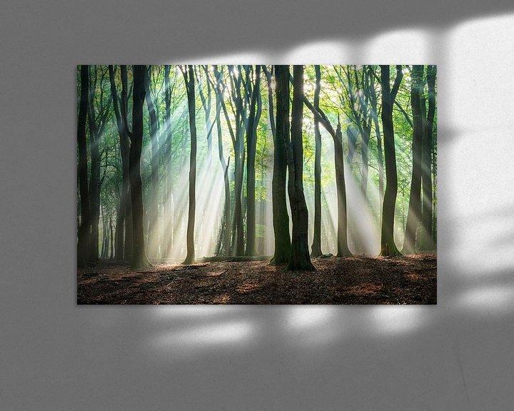 Sfeerimpressie: Lichtstralen in het beukenbos van Rick Kloekke