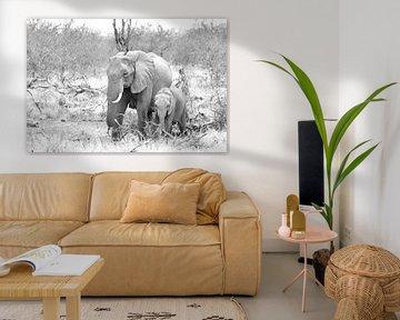 Olifanten in zwart wit