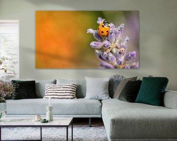 Lavendel von Kim Hiddink
