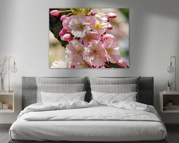 Japanische Kirschblüte (Sakura) von Eduard Lamping