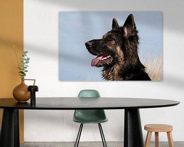 Deutscher Schäferhund von Annelies Cranendonk