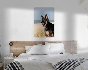 Duitse herder op het strand van Annelies Cranendonk