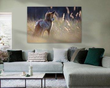Jagende vos von Pim Leijen