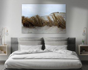Duinen, (Hargen aan Zee) Camperduin Noord - Holland