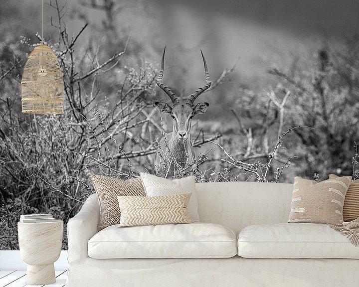 Sfeerimpressie behang: Antilope van Visueelconcept