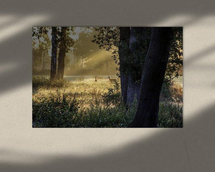 Beispiel: Rehe am Morgen 2) von Norbert Sülzner