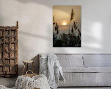 Zonsondergang tussen het riet. van Jurjen Jan Snikkenburg