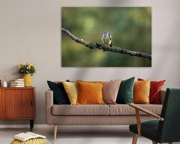 Mésange bleue sur la branche 1