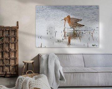 Paar Uferschnepfen in den Niederlanden angekommen von Eric Wander