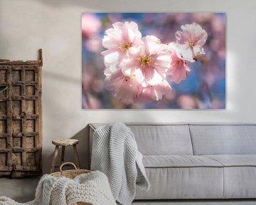 Blütenstand der Kirsche Makro mit Bokeh im Frühling von Dieter Walther