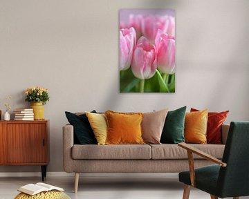 Zarte rosa Tulpen Nahaufnahme